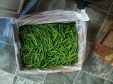 Green Beans!