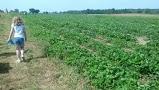 Strawberry fields forever....