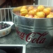 Fresh peaches....