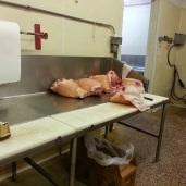 Fresh meats....