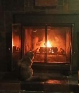 Famine enjoying a fire. WOW how she has grown.