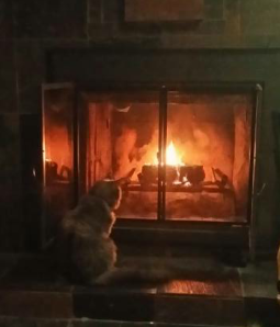 Famine enjoying a fire. WOW how she has grown.