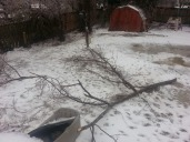 More branches down in my yard.