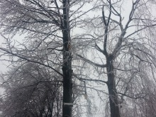 Trees covered in ice.