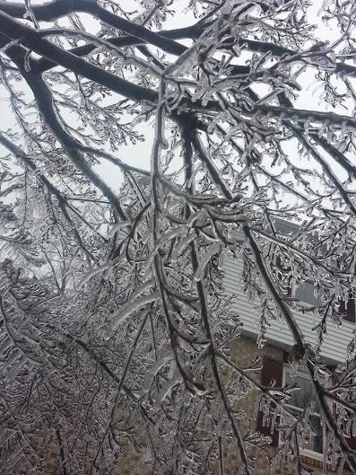 our dogwood tree.