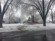 More downed tree limbs.