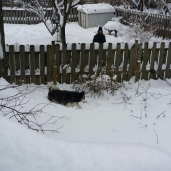 Avalanche is in front of our 6 ft privacy fence.