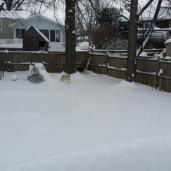 Tsunami trying to MUSH through the snow.