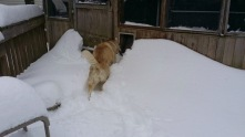 They had to dig out their dog door.