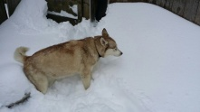 Tsunami trying checking out the snow.