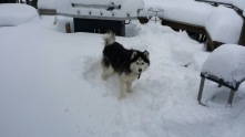 Avalanche decided that the deck was safer then the kids.