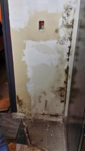 LOVELY mold we found behind a set of cabinets....