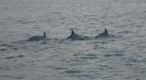 Dolphins....