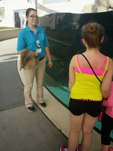 Learning about Harbor Seals.....